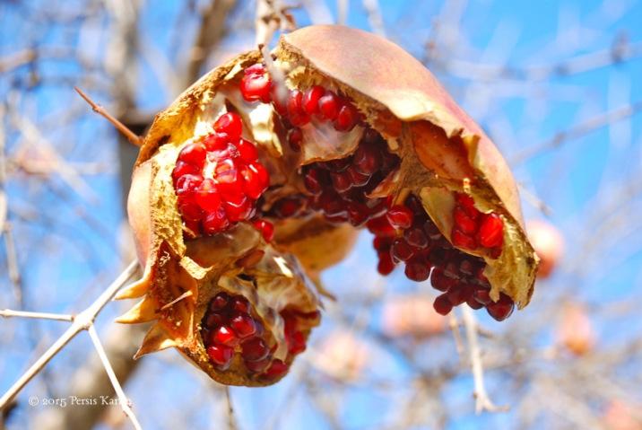 PersisKarim_pomegranate